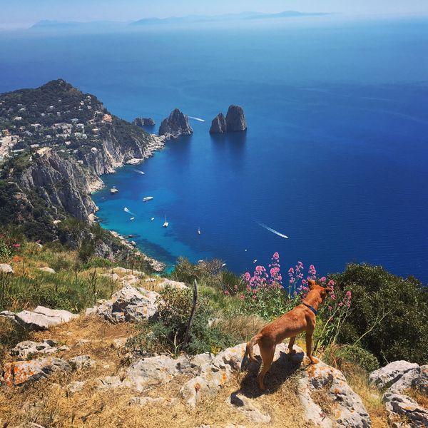 Jack on Capri.jpg