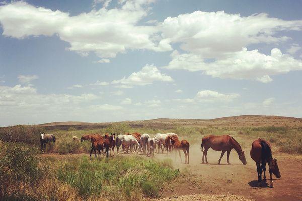 Horses in West Texas