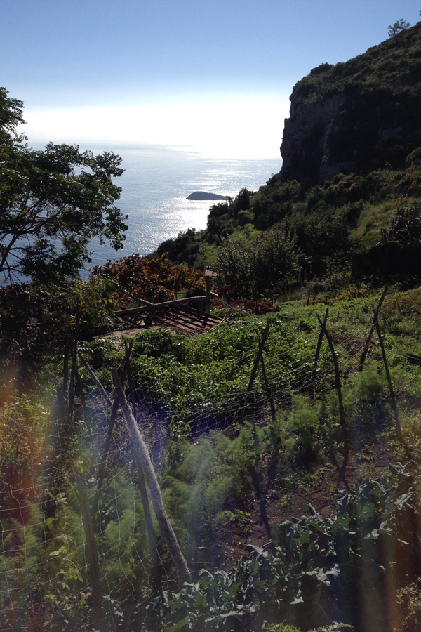 Amalfi coast garden