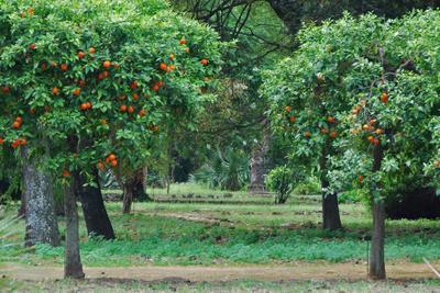Sicily, Palermo botanical gardens.jpg