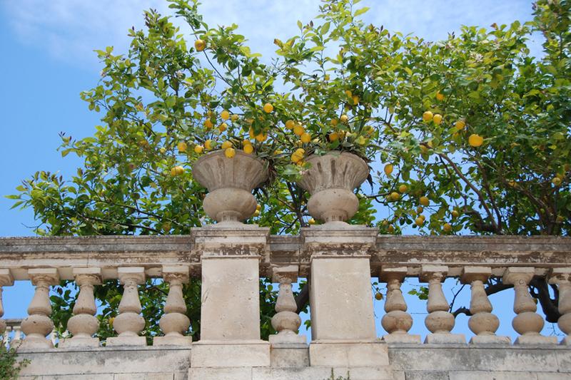 Sicily, lemons.jpg