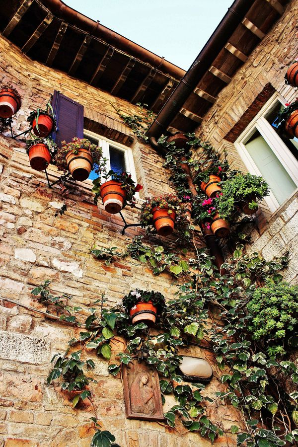 Lillian Cooper, Tuscan Flowerpots.jpg