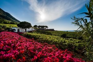 Capofaro flowers.jpg