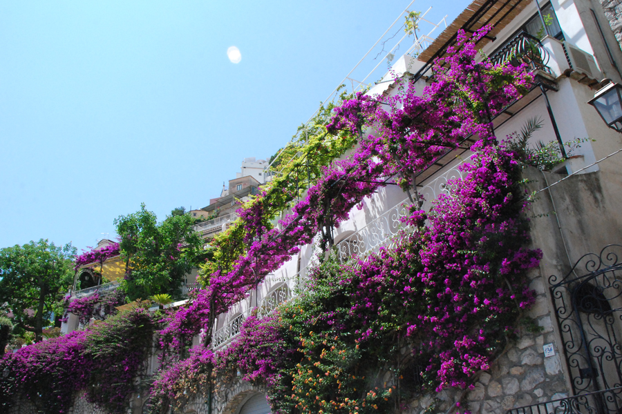 Amalfi Coast bougainvillea