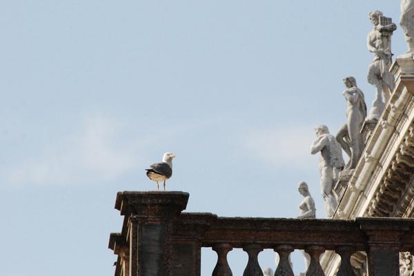 Venice, Sansovino gabbiano.jpg