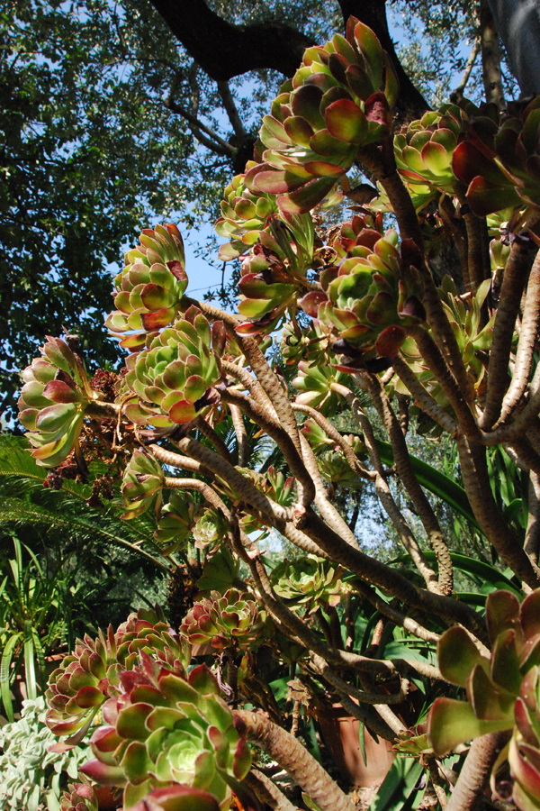 Amalfi Coast succulents