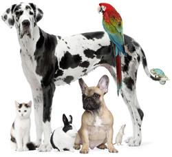 image-veterinary-compounding.jpg