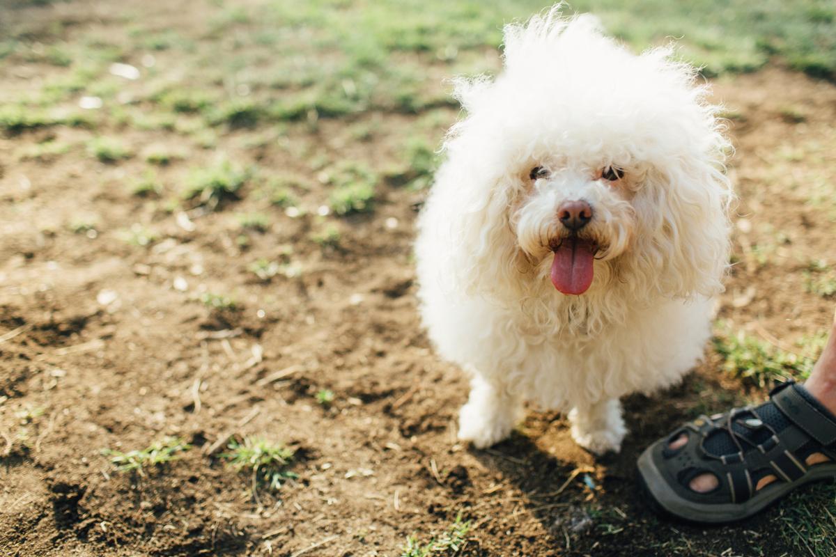 dog in balboa park