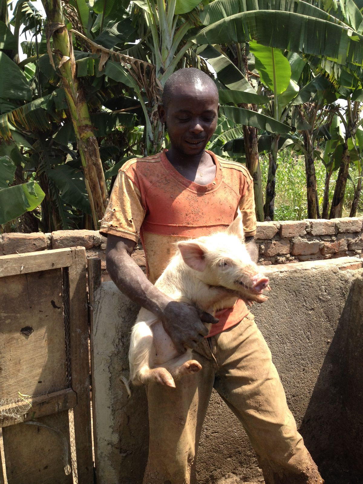 Piggery built with ekissa funds now sustains Joseph & his family
