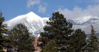 Peaks-n-Trees.jpg