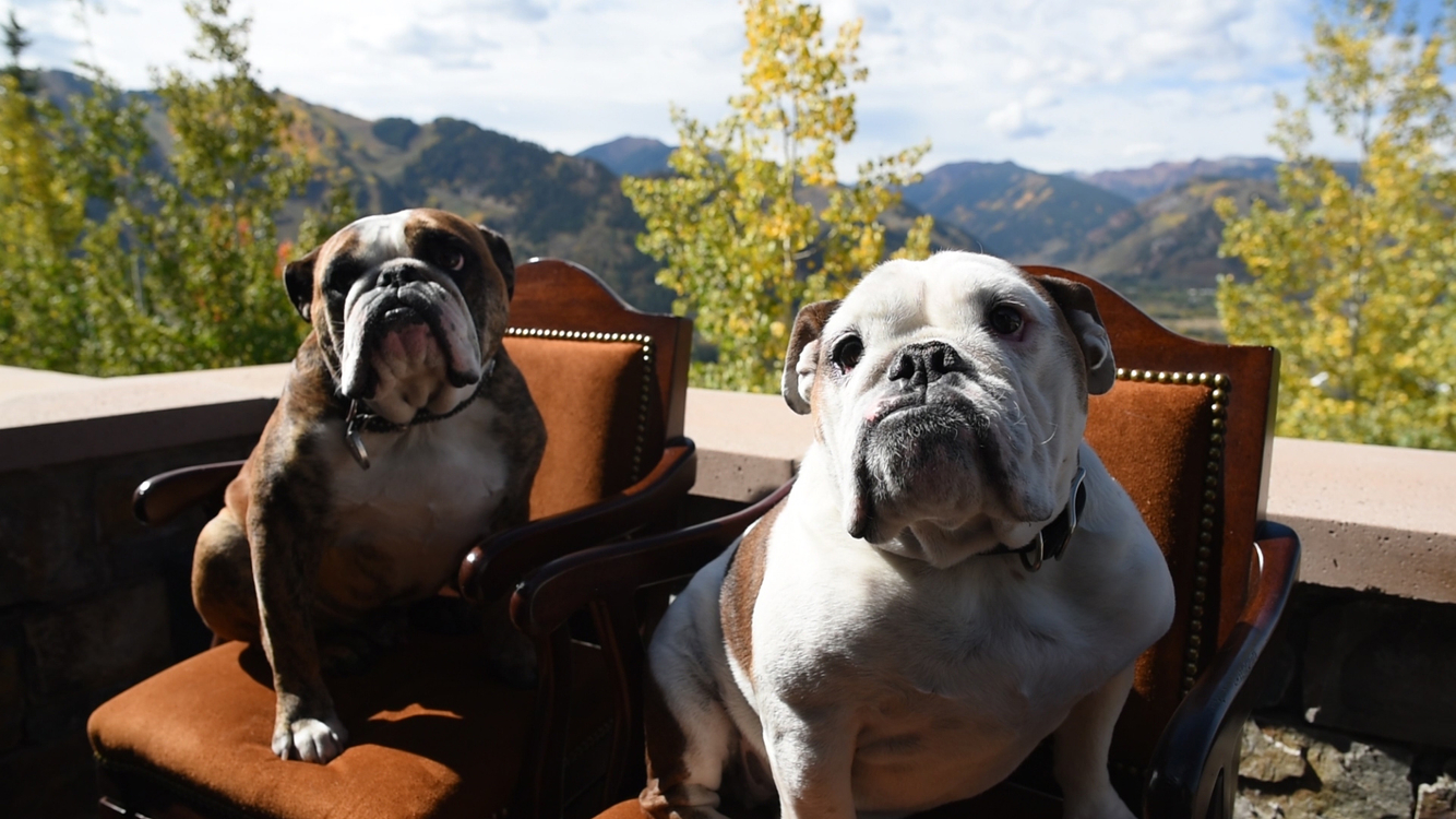 Joshua Landis - Dogs on Red Mountain porch.jpg