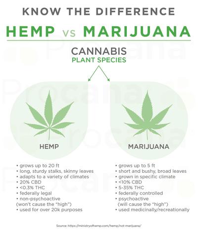 Procana_Hemp vs Marijuana.jpg