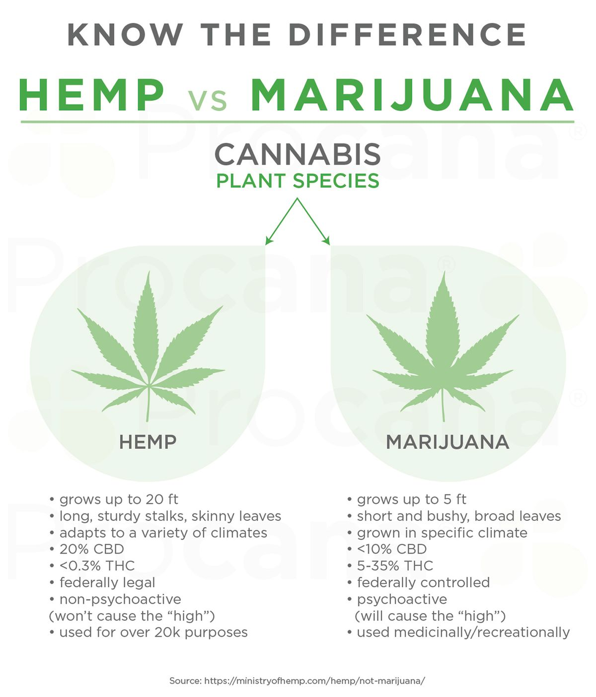 Procana_Hemp vs Marijuana.jpg