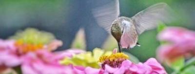 Capture_Flower2.PNG