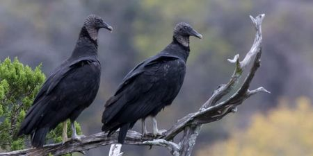 FALL BIRD HIKE.jpg