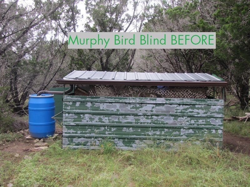 Murphy Blind Before.jpg
