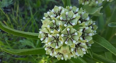Wildflower Walk image.jpg