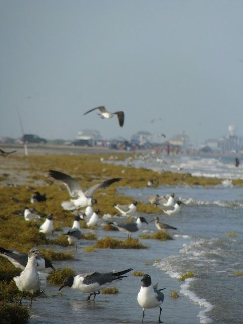 Bolivar Peninsula - Website Image.jpg