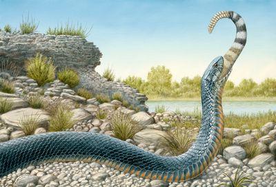 Indigo Snake 300.jpg