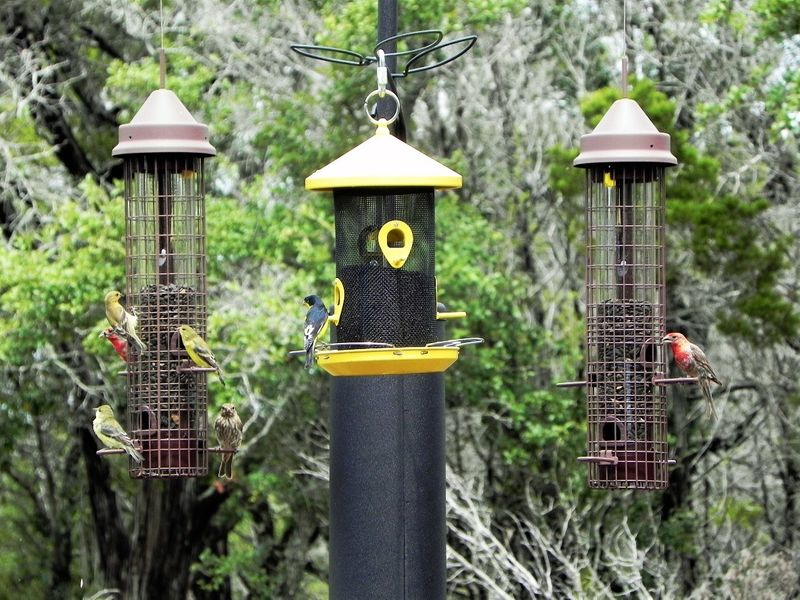 FeederWatch Pic 3 Birds.jpg