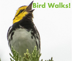 Bird Walks image.png