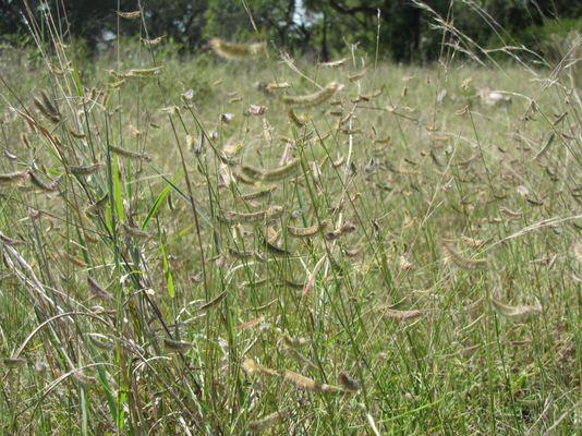 Grass Walk.jpg