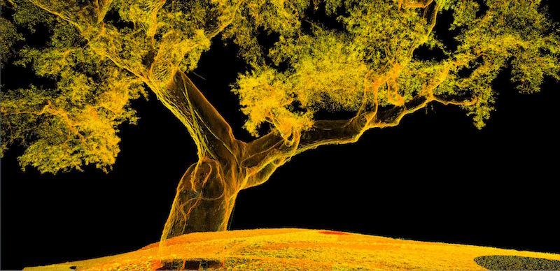 tree-scan-capture-2.jpg