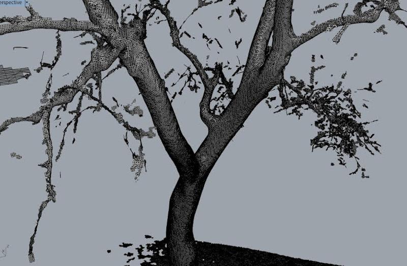 treexoffice-colorado-scan-2.png