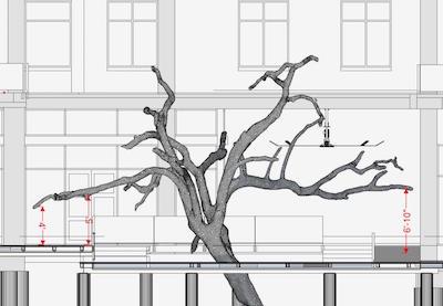 texas-tree-scan.jpg