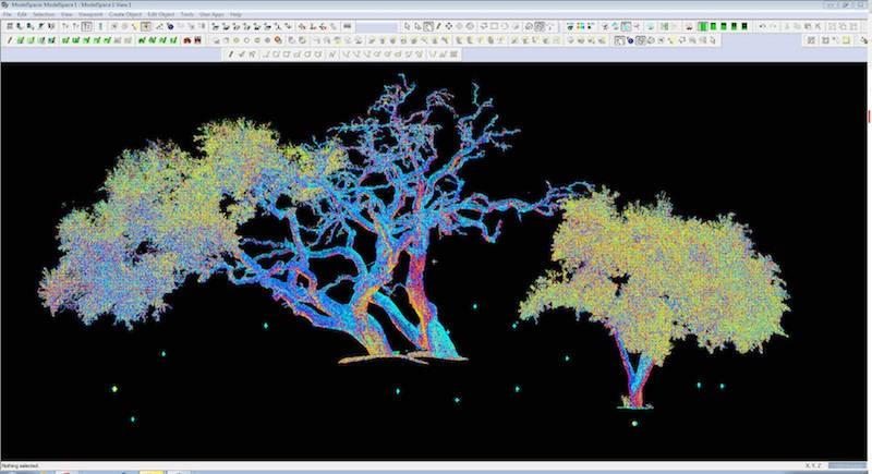 tree-scan-capture-4.jpg