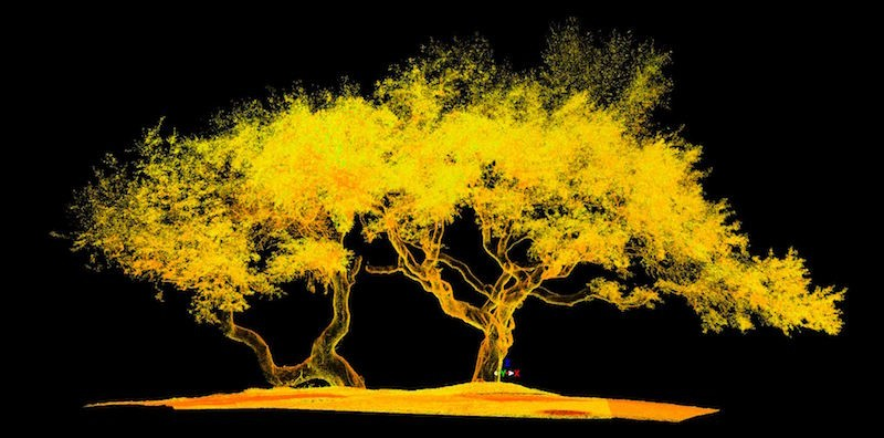 tree-scan-capture-1.jpg