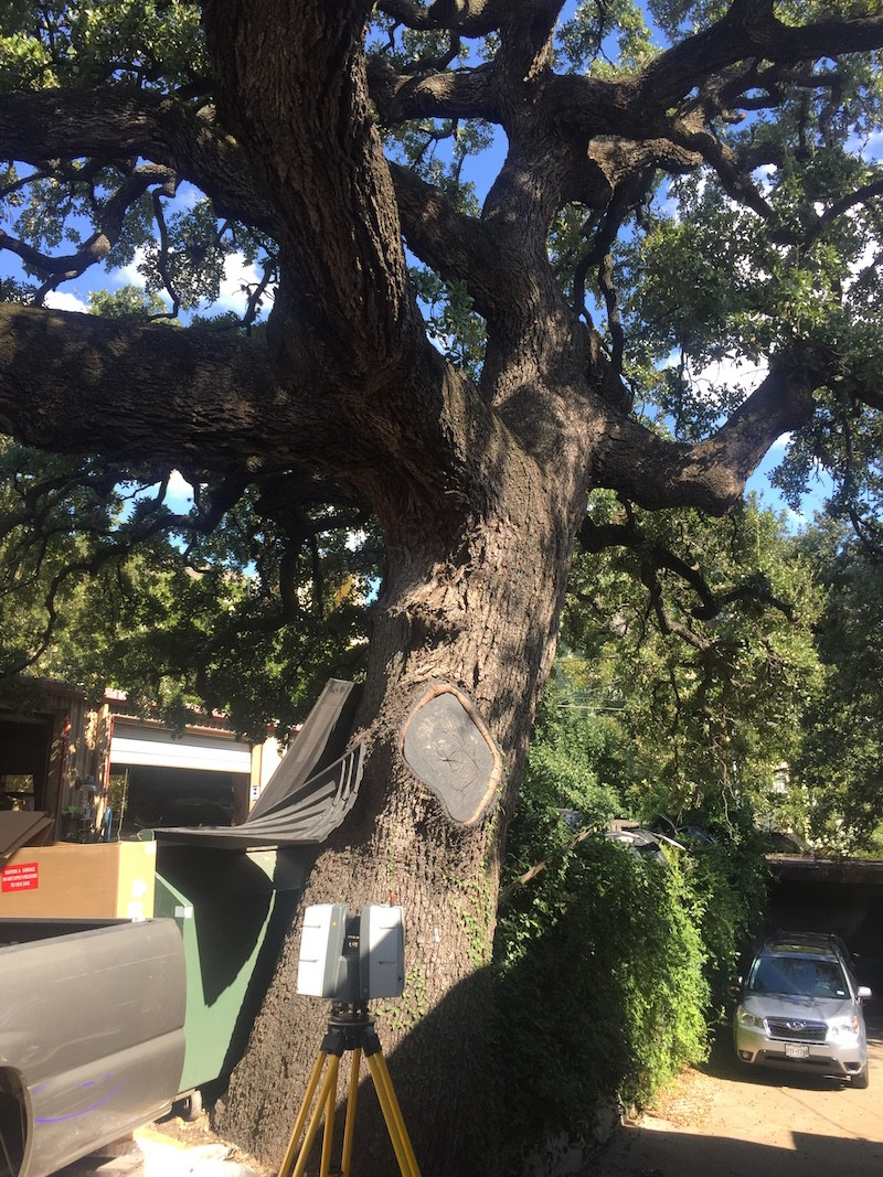 3d-laser-scanning-trees-2.jpg