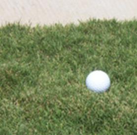 Tifway Bermuda 419 Grass Sod For Sale