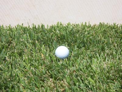 St. Augustine Raleigh Grass Sod in Austin