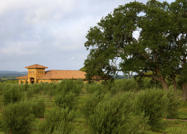Texas-Olive-Co-Dripping-Springs.jpg