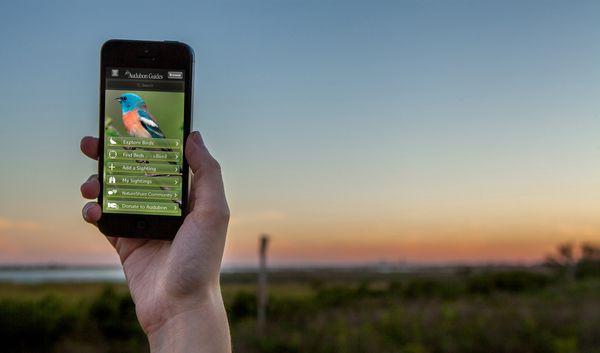 bird app.jpg