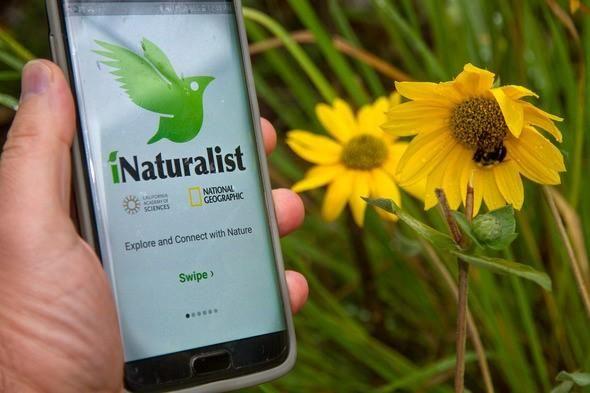 iNaturalist App.jpg