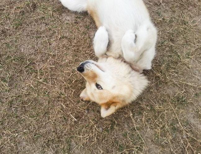 amber puppy_edited.jpg