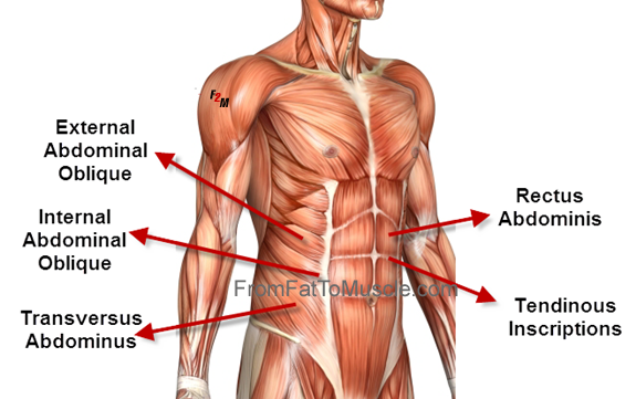 abs image.png