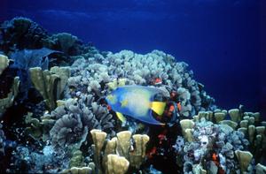 cozumel diving fish.jpg