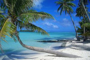 tahita bora bora palm trees ocean.jpg