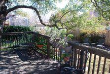 PRINT - Broomflower backyard 4.jpg