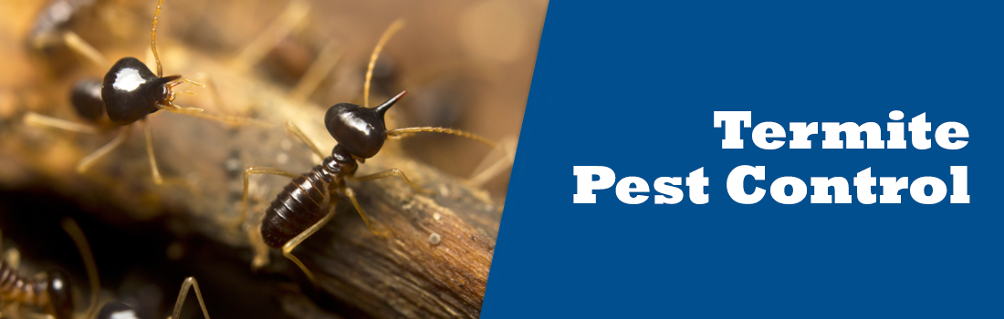 Slide4-Termite.png