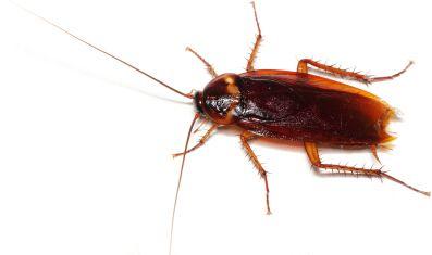 Bug Database - Treasure Coast Pest Control