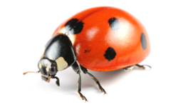 Bug Database - Treasure Coast Pest Control