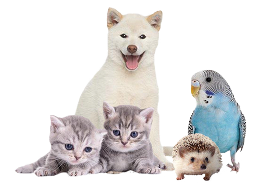small-animals1.png