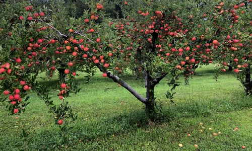 Wheelers Orchard.jpg