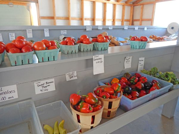 fall-creek-mennonite-community-2-produce.jpg