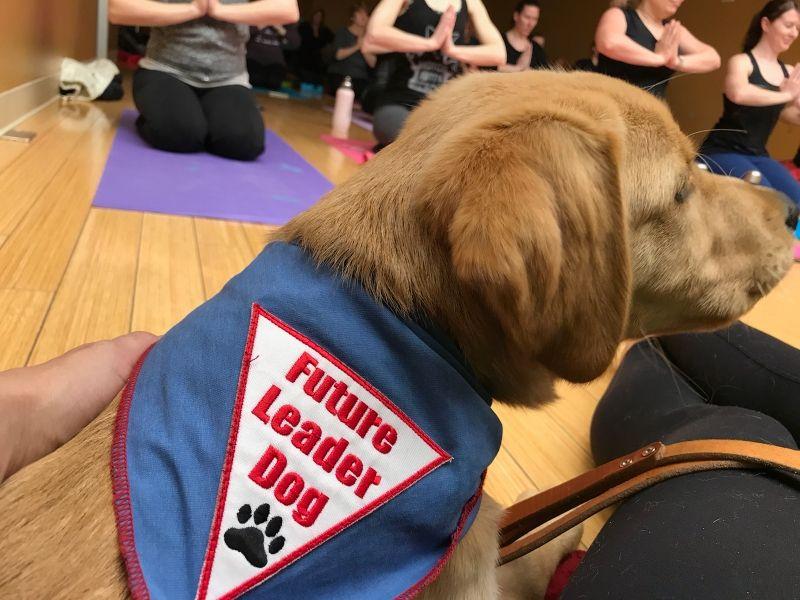Puppy Love Yoga April 2018_UpDog.jpg