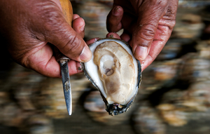 Shucked Oyster in Hand  © Jay Fleming.jpg